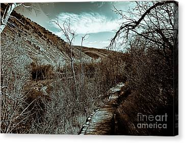 Mountain Creek Path-sundance Utah V3 Canvas Print by Douglas Barnard