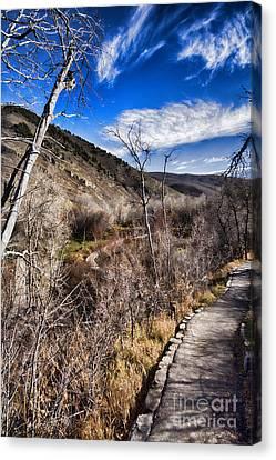 Mountain Creek Path-sundance Utah V4 Canvas Print by Douglas Barnard