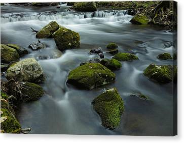 Mountain Creek In Stokes State Forest Canvas Print by Rick Berk