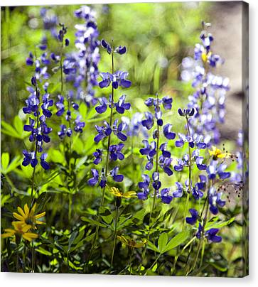 Canvas Print featuring the photograph Mountain Flowers by Kjirsten Collier
