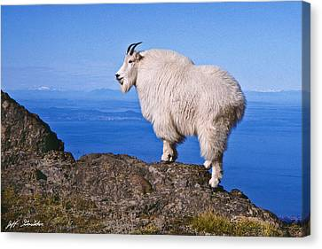 Canvas Print featuring the photograph Mountain Goat On Klahane Ridge by Jeff Goulden