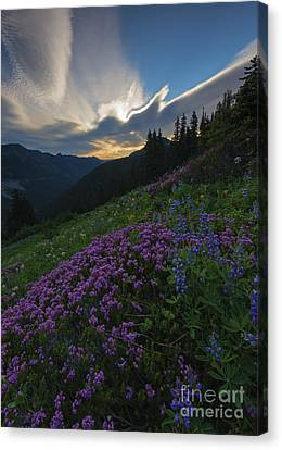 Mountain Heather Dawn Canvas Print by Mike  Dawson