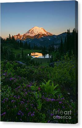 Mountain Heather Morning Canvas Print by Mike Dawson