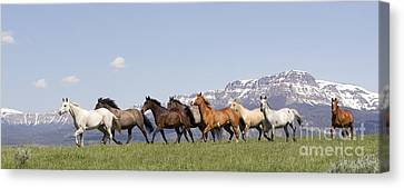Mountain Horses Canvas Print by Carol Walker