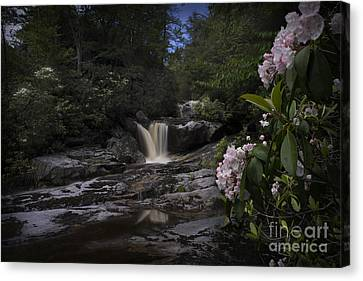 Mountain Laurel And Falls On Small Stream Canvas Print by Dan Friend
