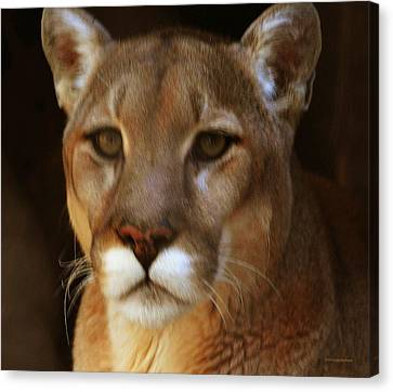 Mountain Lion Portrait Canvas Print by DiDi Higginbotham
