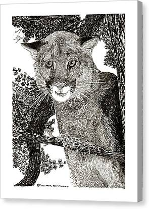 Mountain Lion Puma Canvas Print by Jack Pumphrey