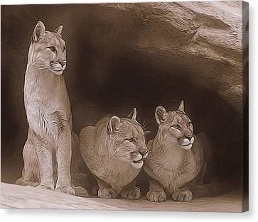 Mountain Lion Trio On Alert Canvas Print