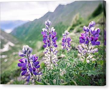 Canvas Print featuring the photograph Mountain Lupine by Tim Newton