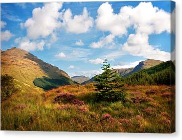 Mountain Pastoral. Rest And Be Thankful. Scotland Canvas Print by Jenny Rainbow