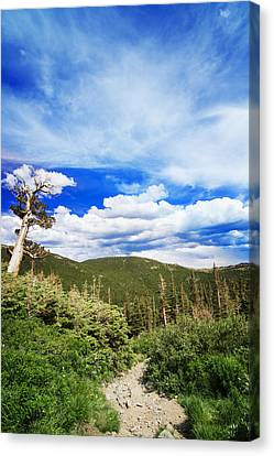 Mountain Path Canvas Print by Mark Andrew Thomas