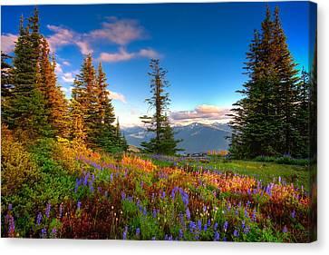 Mountain Rainier  Sunset Canvas Print by Emmanuel Panagiotakis