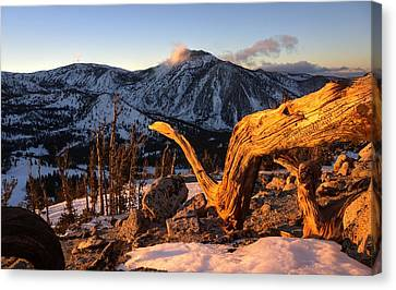 Mountain Snake Canvas Print