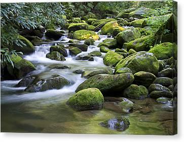 Mountain Stream 1 Canvas Print by Larry Bohlin