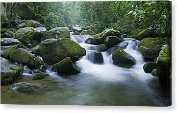 Mountain Stream 2 Canvas Print by Larry Bohlin
