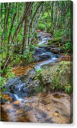Mountain Stream Canvas Print by David Cote