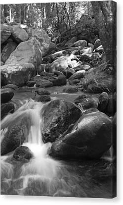 Mountain Stream Monochrome Canvas Print by Larry Bohlin