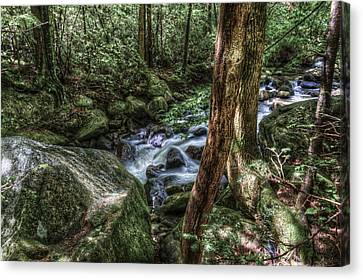 Mountain Streaming Canvas Print