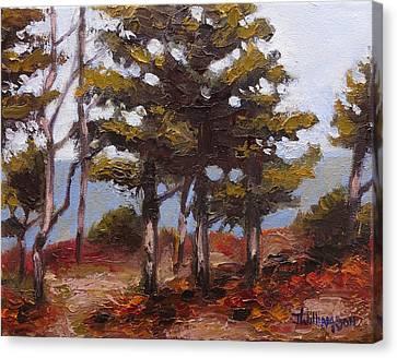 Mountain Top Pines Canvas Print by Jason Williamson