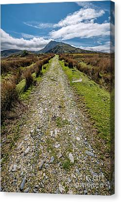 Mountain Track Canvas Print by Adrian Evans