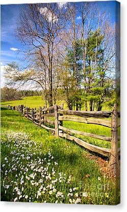 Mountain Wildflowers In The Blue Ridge I Canvas Print