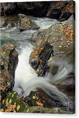 Mountains Stream 2004 Canvas Print