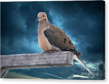 Canvas Print featuring the photograph Mourning Dove Blue Sky by Marjorie Imbeau