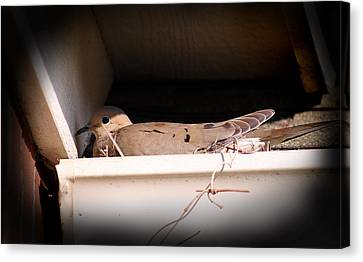 Mourning Dove Canvas Print by Karen Adams