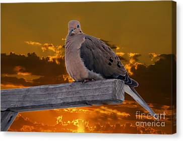 Canvas Print featuring the photograph Mourning Dove Orange Sky by Marjorie Imbeau
