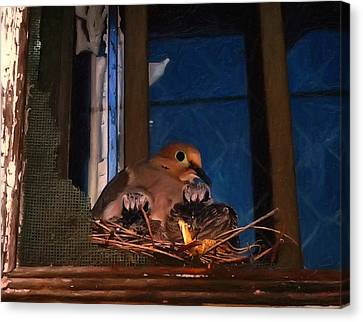 Mourning Dove With Chicks Canvas Print by Chris Flees
