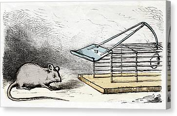 Mouse And Mouse Trap Canvas Print by Cci Archives