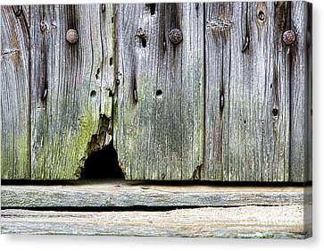 Mouse Hole Canvas Print by Olivier Le Queinec