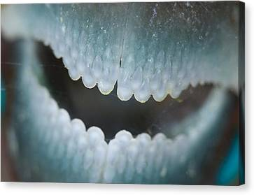 Mouth Of Parrotfish Canvas Print by Science Photo Library