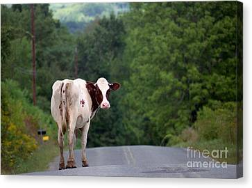 Movin On Down The Road Canvas Print