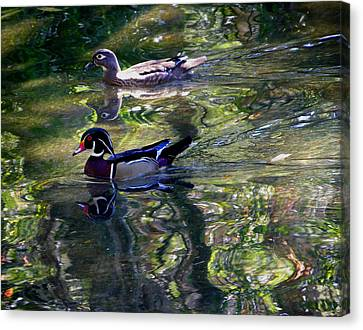 Mr And Mrs P W Duck Canvas Print