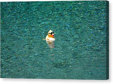 Mr Cool In The Pool Canvas Print by Jay Milo