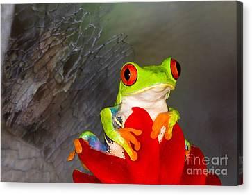 Mr. Curious Canvas Print by Mary Lou Chmura