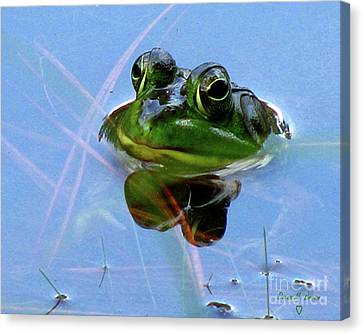 Canvas Print featuring the photograph Mr. Frog by Donna Brown
