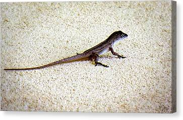 Canvas Print featuring the photograph Mr. Gecko by Pennie  McCracken
