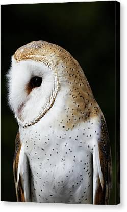 Mr Owl  Canvas Print