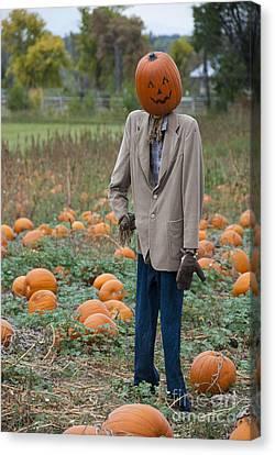Frightening Canvas Print - Mr. Pumpkin Head by Juli Scalzi