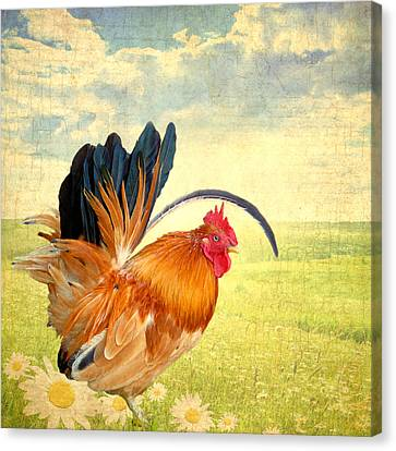 Mr. Rooster Greets The Day Canvas Print by Lisa Knechtel
