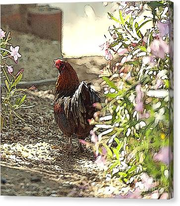 Mr. Rooster Takes A Stroll Canvas Print by Artist and Photographer Laura Wrede
