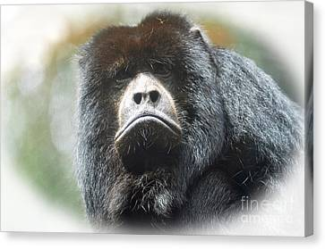 Year Of The Monkey Canvas Print - Mr Smiley A Black Howler Monkey by Jim Fitzpatrick