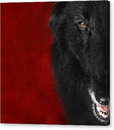Belgian Shepherd Art 1 Canvas Print by Wolf Shadow  Photography