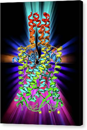 Mscl Ion Channel Protein Structure Canvas Print by Laguna Design