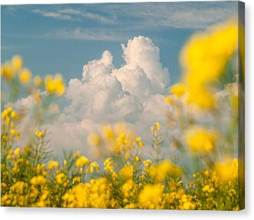 Mt Cloud Canvas Print by Davorin Mance