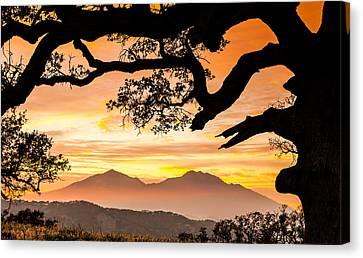 Oak Canvas Print - Mt Diablo Framed By An Oak Tree by Marc Crumpler