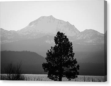 Canvas Print featuring the photograph Mt. Lassen With Tree by Jan Davies