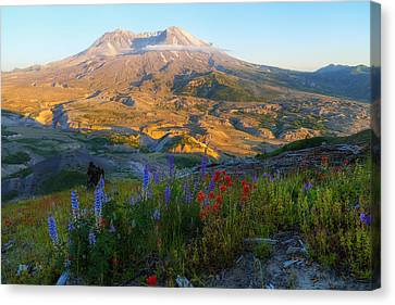 Mt. St. Helens Golden Hour Canvas Print by Ryan Manuel